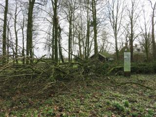 De omgevallen boom op Jongemastate ligt precies langs het pad.