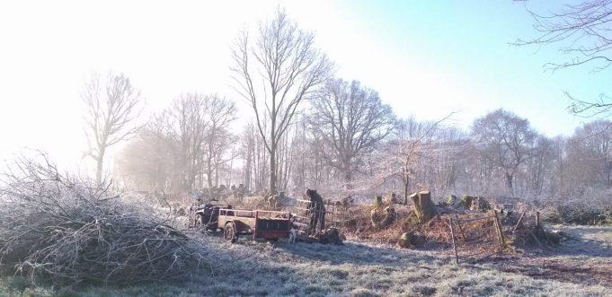 Noardlike Fryske Wâlden. Januari onderhoud.