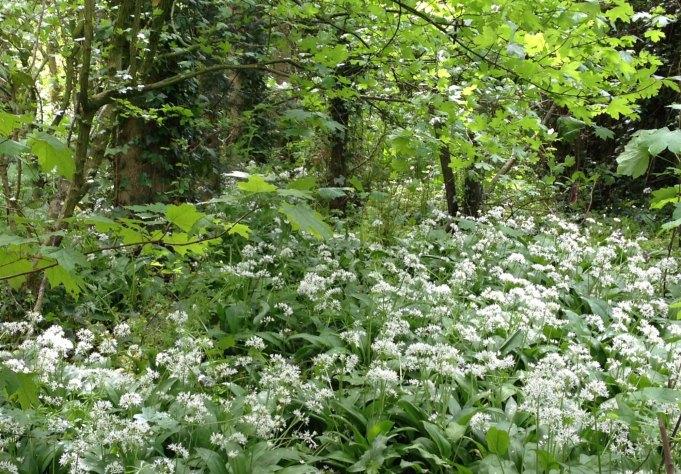 Daslook in het bosje