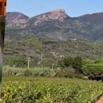 Besuch im größten Weingut der Insel