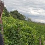 Was nach Regenschauern hilft: Trockener Wein!