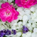 Ein Menü mit Rosen