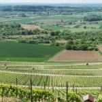 Weinkultur pur: das Terroir plus die Menschen…