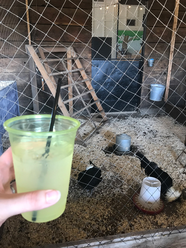 Drinking with chickens at the LA County Fair // stirandstrain.com