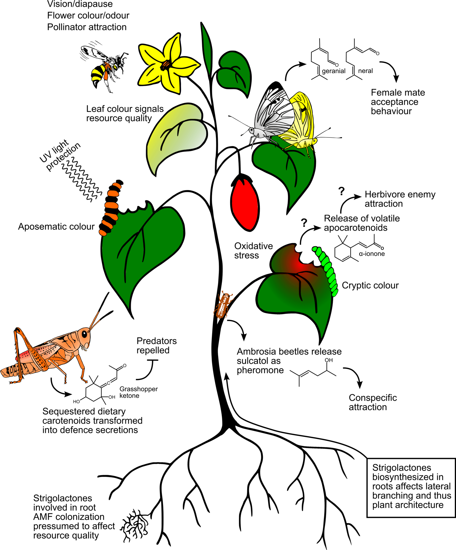 Pivotal Pervasive Pigments Carotenoids In Insect Ecology