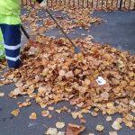 Continuă operațiunea de colectare a frunzelor de pe străzi / PROGRAM