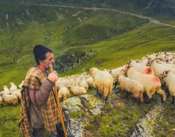 Un cioban i-a dat cadou fiului o avere de 4,5 milioane de euro. ANAF-ul doreşte impozitarea sumei