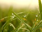 wallpapers-for-computer-free-morning-grass-dew-hello-the-new-day