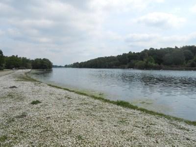 Clumber lake 3