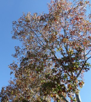 Beautiful Fall Day in So Cal