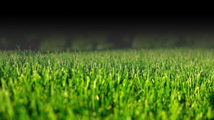 banner_slider_grass_mobile_2-1.jpg 3