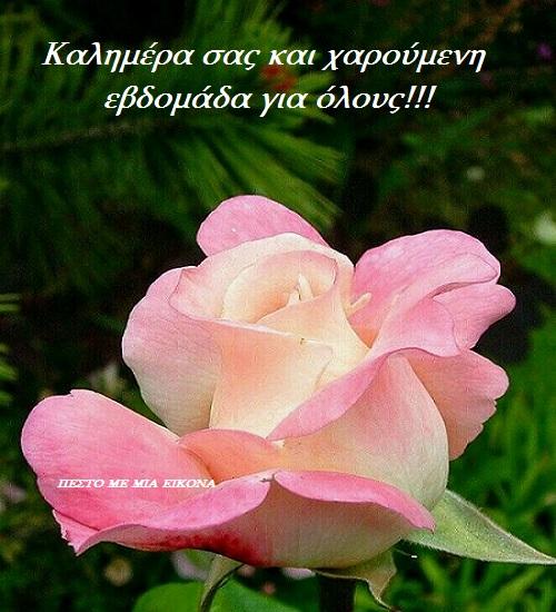 Read more about the article Καλή Εβδομάδα σε όλους…!!! Καλημέρα