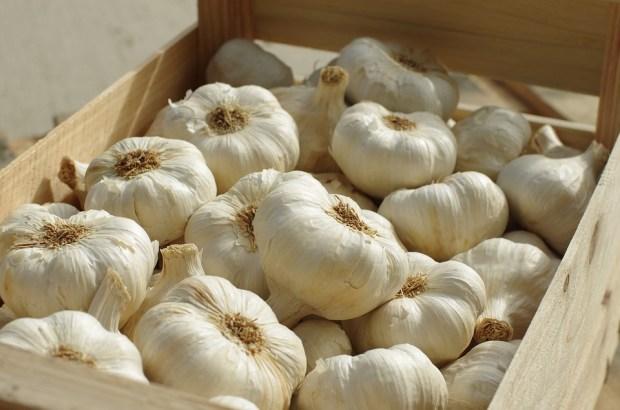 Food Garlic White Succulent Agriculture Garlic