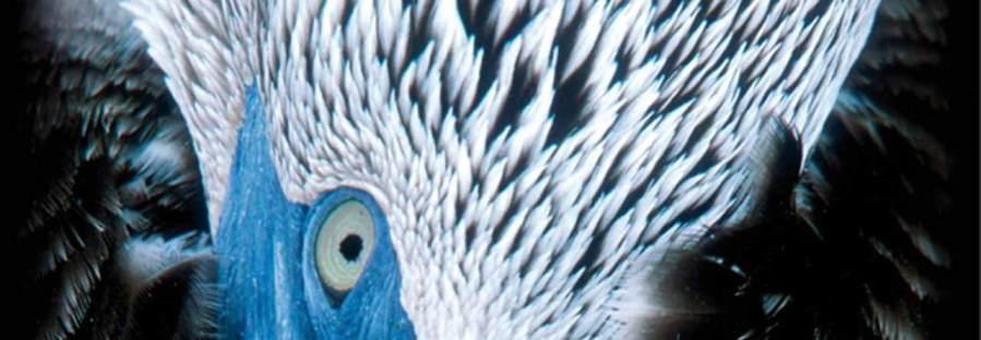 bird-visual-guide