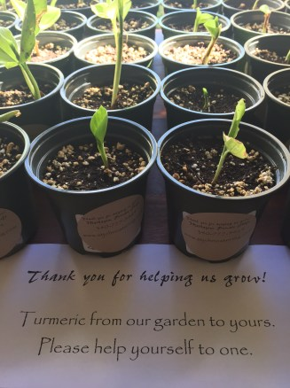 Spreading the love, one turmeric plant at a time