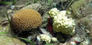 Coral and coral bleaching