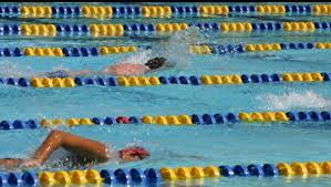 people swimming in lanes, sport swimming