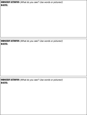 experiment observation sheets2