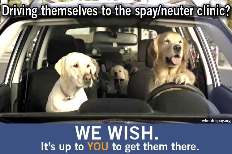 Low cost spay neuter services St. Louis