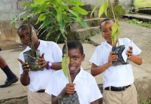 Youngsters in Babonneau preparing to plant saplings to help combat damage to riverbanks.