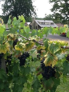 Villa Antonio Winery Aug 13 2015_