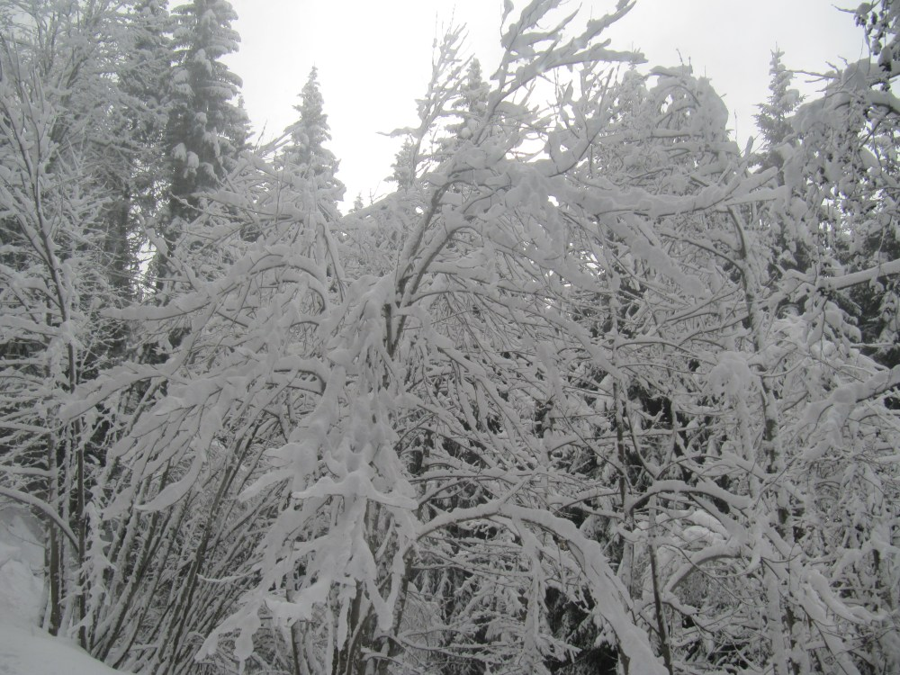 Au pays du Mont Blanc (5/6)