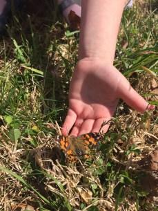 Butterfly Release 2015