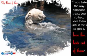 picture of polar bear in pool spiritual appetizers - love enemies