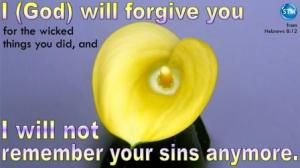 Picture of yellow calla lily for the god will forgive you Bible study Hebrews 8:12