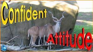 picture for positive attitude - San Francisco Zoo, San Francisco, CA