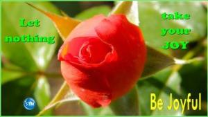 Picture of a red rose for the joyful bs