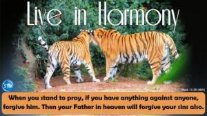 Picture of a pair of tigers for the harmony bible study Mark 11:25