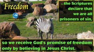 Picture of a zebra for the freedom bible study Galatians 3:22