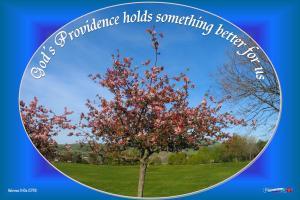 picture for providence - cherry tree, penitencia park, san jose, ca