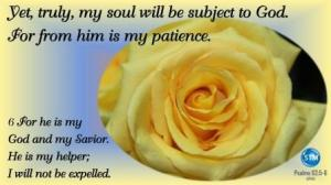 Picture of a beautiful yellow rose for the patience bible study Psalms 62:5