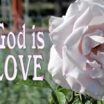Picture of pink rose for the agape love bible study