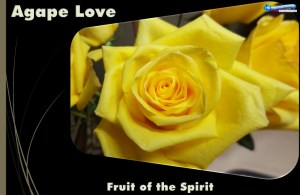 Picture of yellow roses for the agape love Bible study