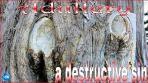 Picture of tree trunk in grand view park, san francisco, ca for the adultery bible study