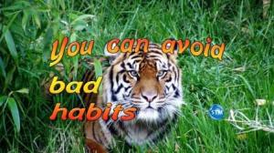 Picture of a tiger for the habits bible lesson