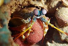 mantisegg