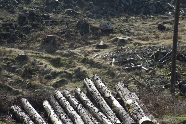 logging industry landscape-4042