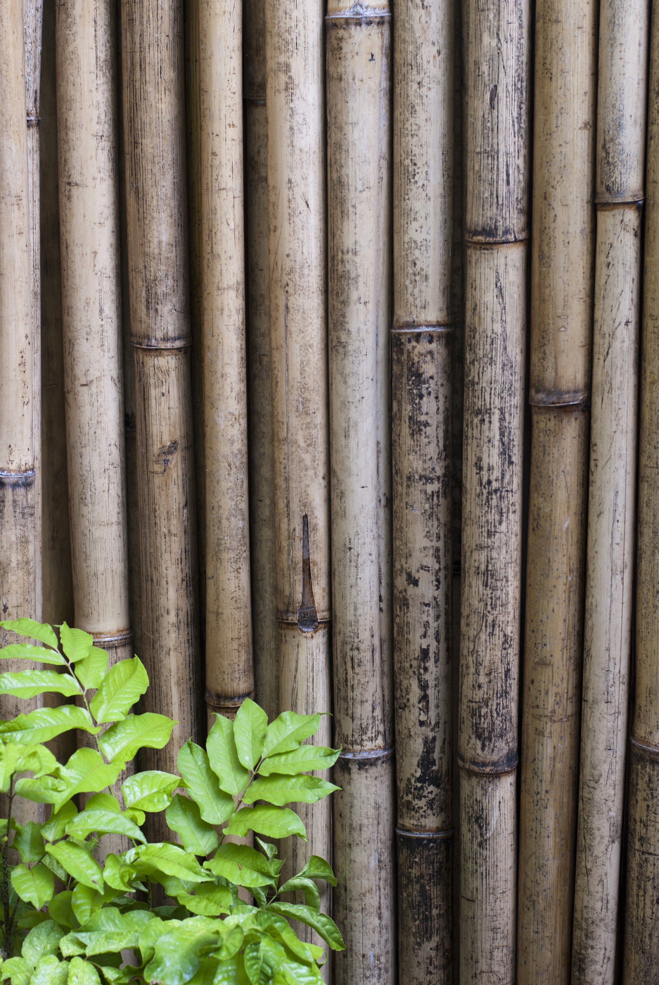 Dried bamboo fencing5976  Stockarch Free Stock Photos