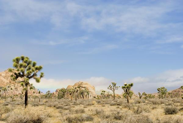 joshua tree landscape-4794 stockarch