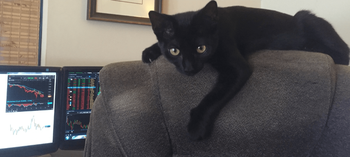 cocoa_on_chair_big