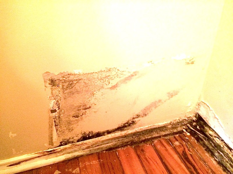 Black mold often found due to old water leaks not addressed.