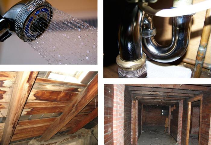 where to find mold in your home