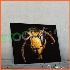 Canvas Prints Single Panels (Animals) – 18×24, 40×40, etc.