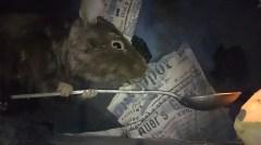 Музей Карлсона поезд крыса