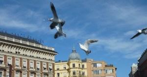 птицы над городом Стокгольм