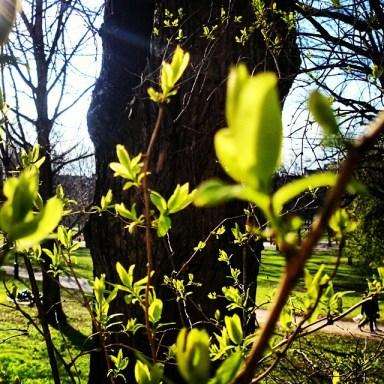 зелененькие листочке в апреле в стокгольме